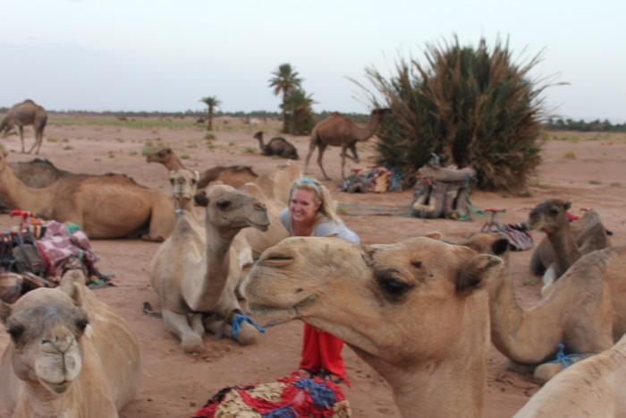 camel friends